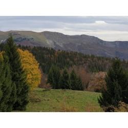Региональный природный парк О Юра (Parc naturel régional du Haut-Jura)