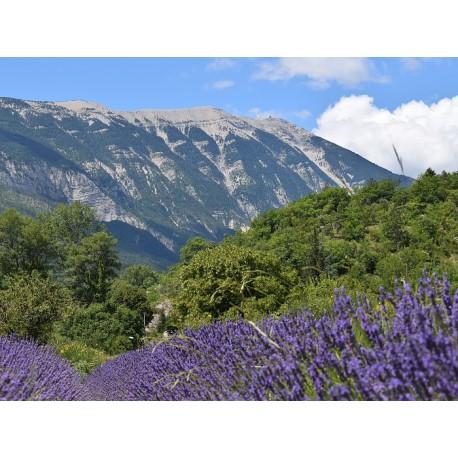 Региональный природный парк Баронь Провансаль (Parc naturel régional des Baronnies provençales)
